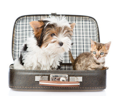 national travel with your pet