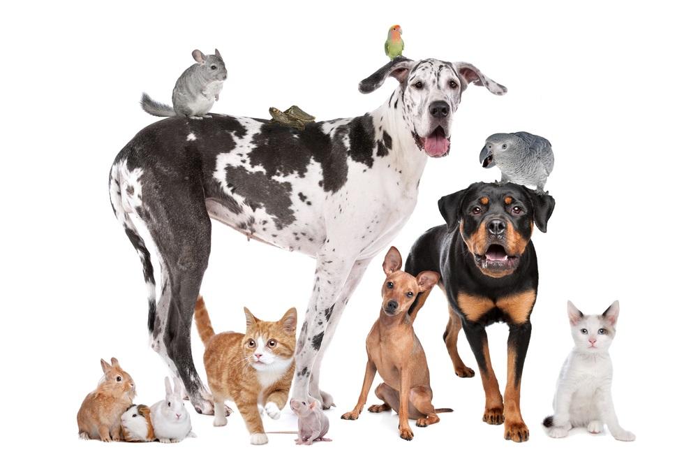 2017 pet holiday calendar