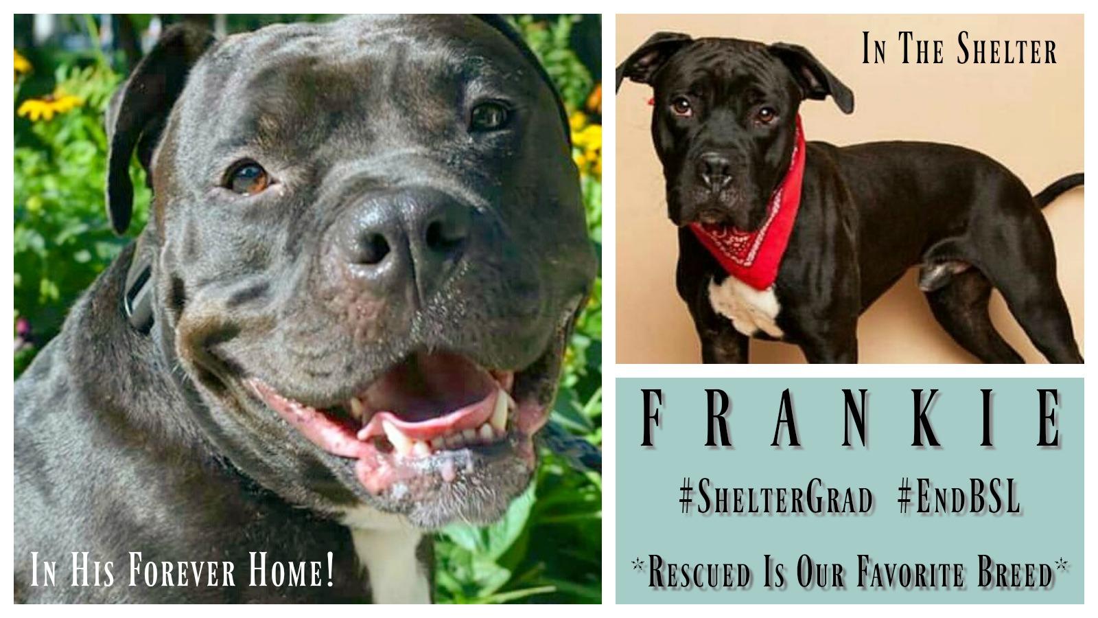 Frankie Featured