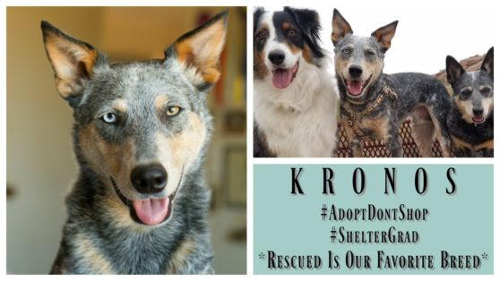 kronos-featured