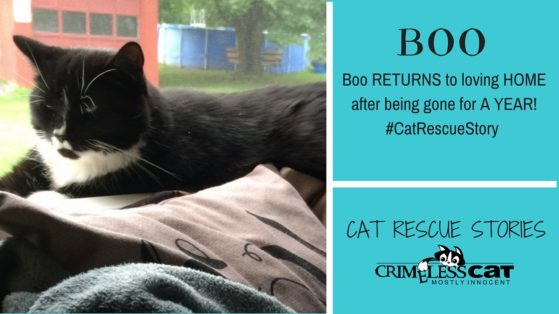 cat rescue story boo