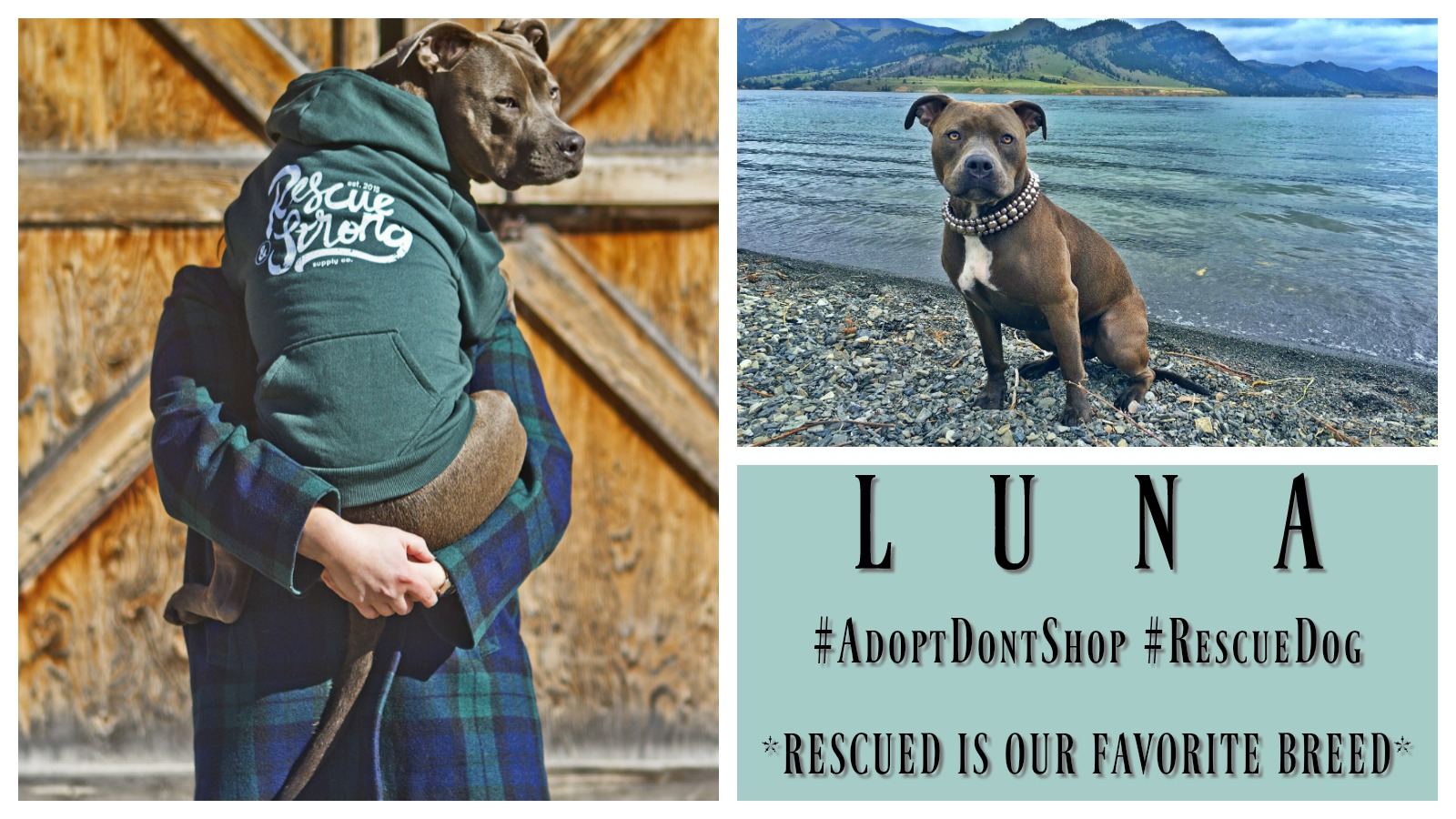 Dog Rescue Stories: Luna Rescued Her Forever Mom AND Her