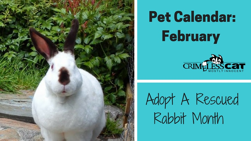 adopt a rescued rabbit