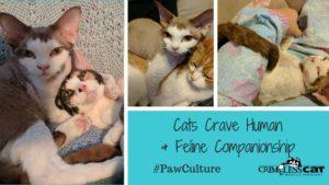 cats crave companionship