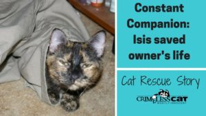 cat rescue story isis