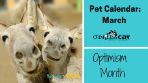 optimism month pet calendar
