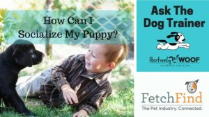 ask the dog trainer puppy
