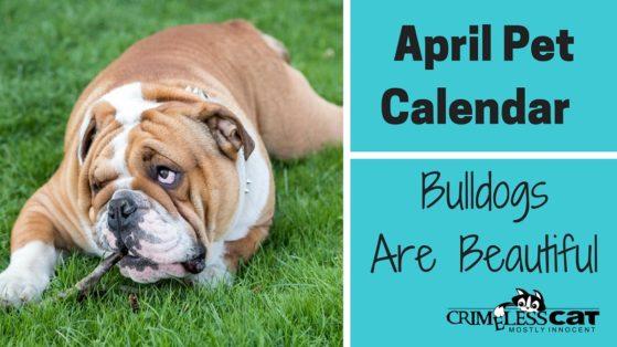 bulldogs are beautiful day