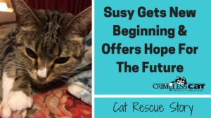 cat rescue story susy