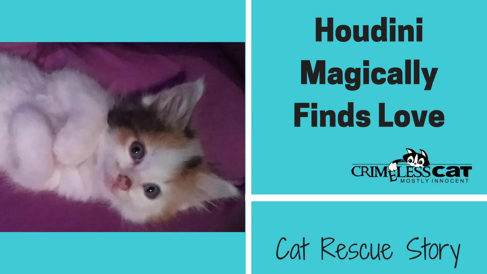 cat rescue story houdini
