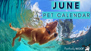 June Pet Calendar