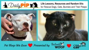 pet blogs we love the daily pip