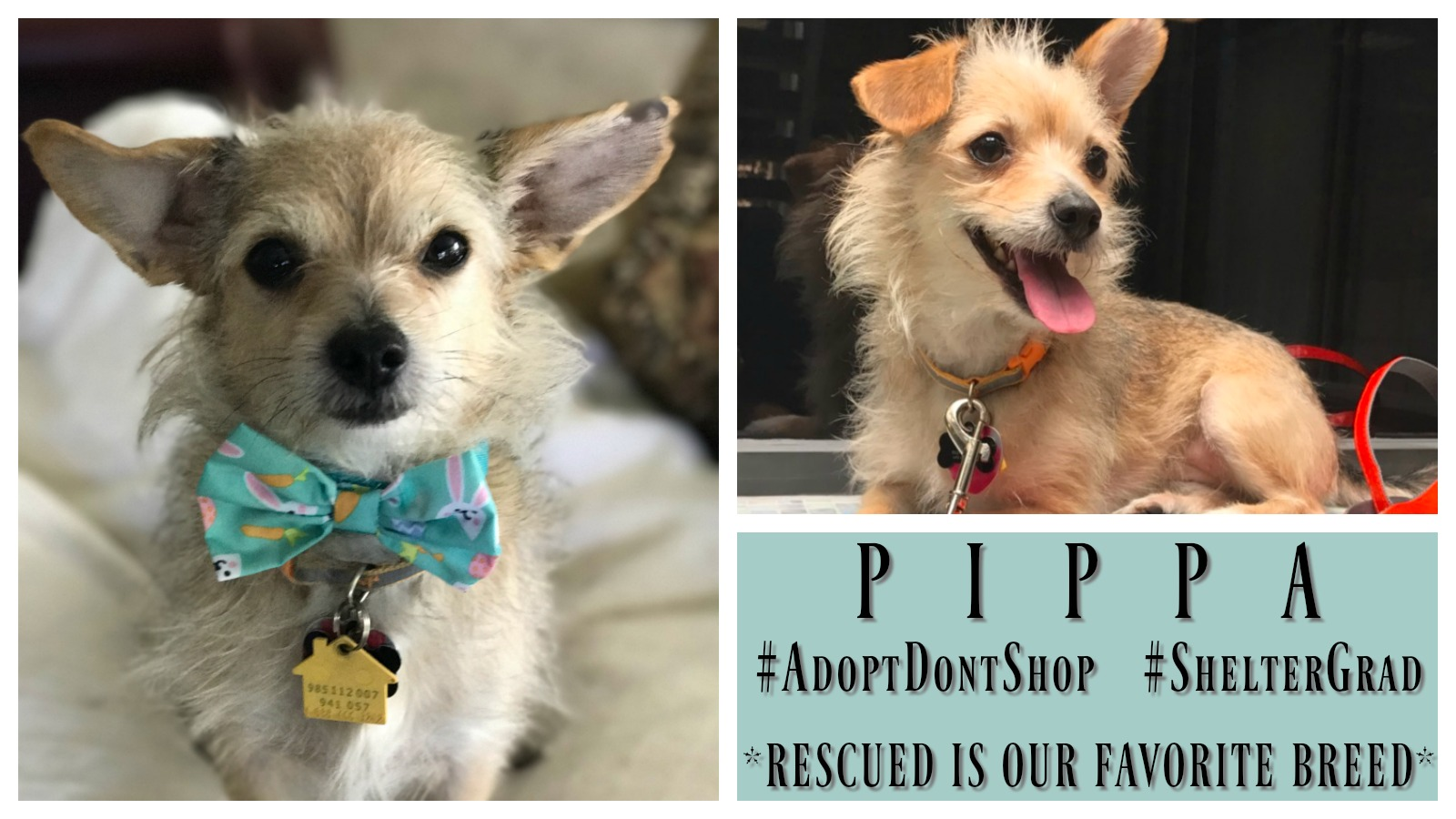 Dog Rescue Stories: Pippa and Her Former Good Human Used to