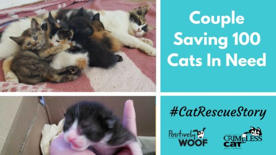 cat rescue story save 100 cats
