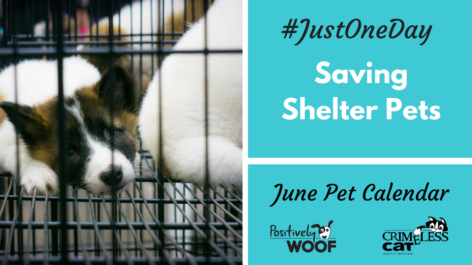 just one day shelter pets