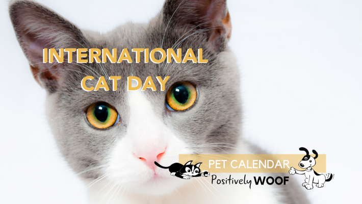 international cat day