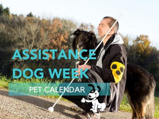 assistance dog week