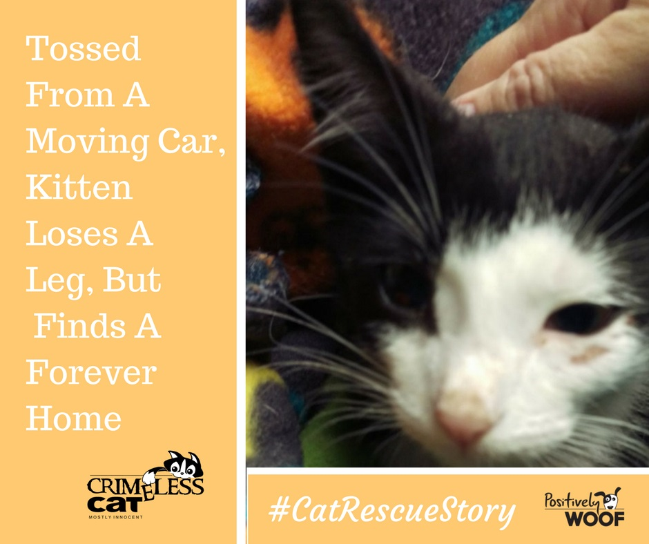 cat rescue story freeway