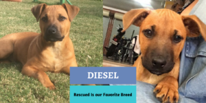 Dog Rescue Stories:  Diesel and His Sisters were Neglected
