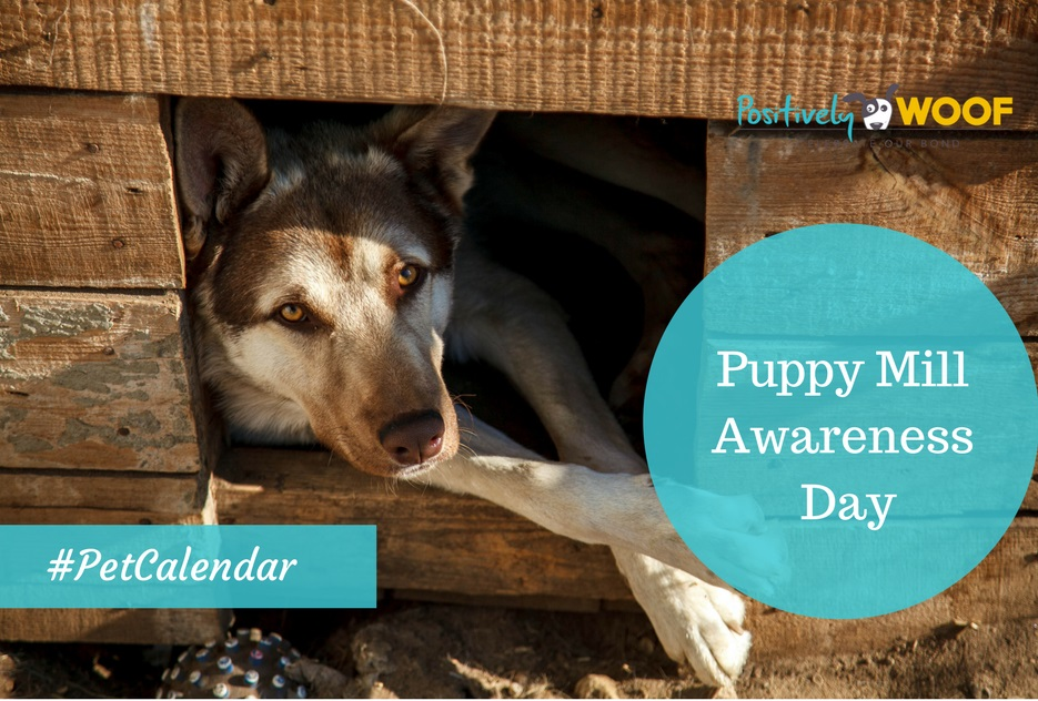 puppy mill rescue pet calendar