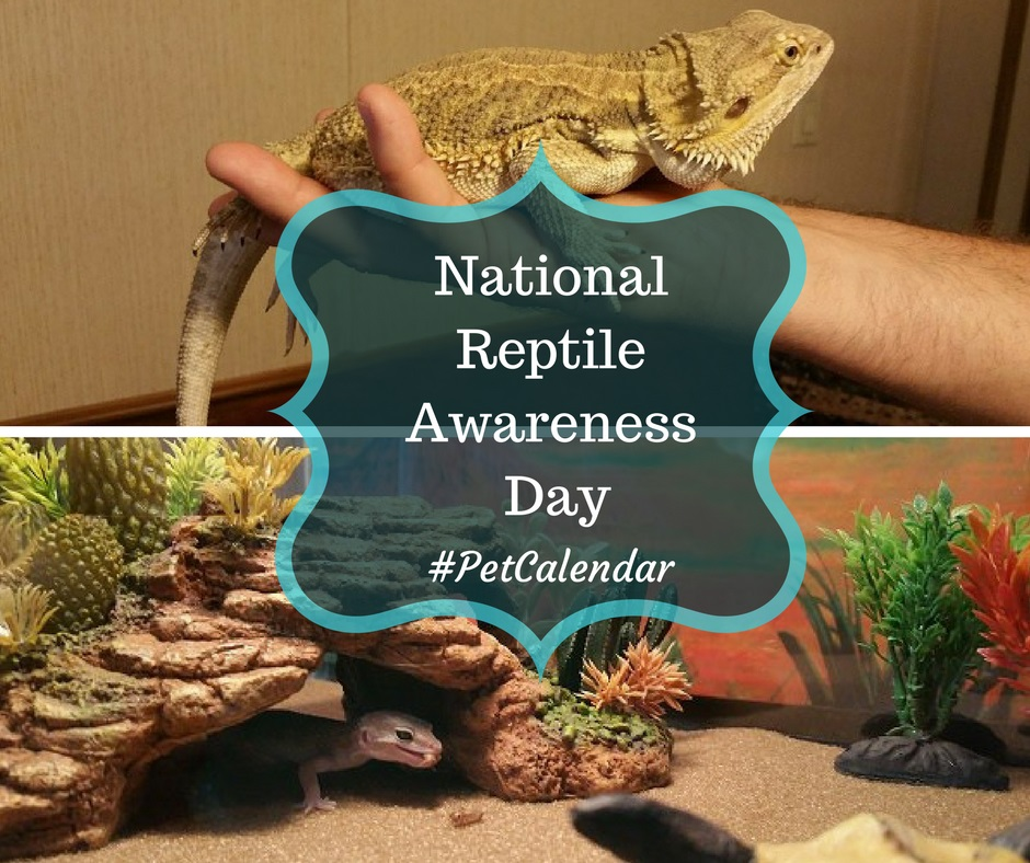 national reptile awareness day