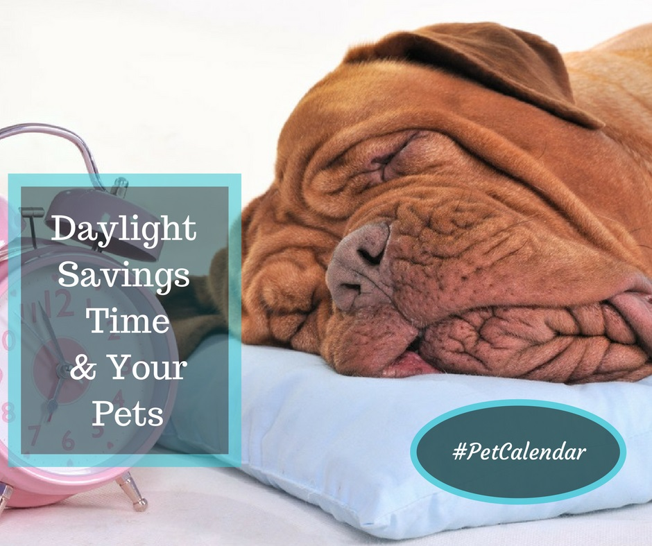 daylight savings time and your pets