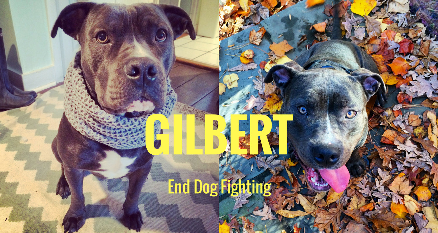 Dog Rescue Stories Gilbert Was Rescued