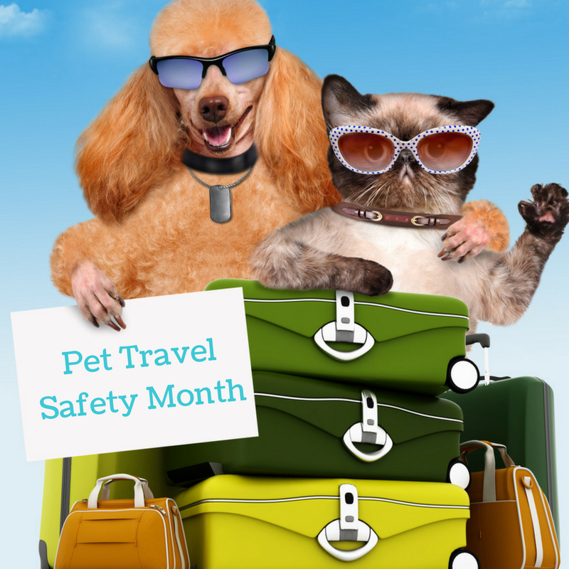 Pet Calendar: Pet Travel Safety
