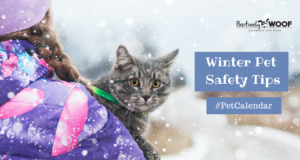 pet cal outdoor pet safety tips
