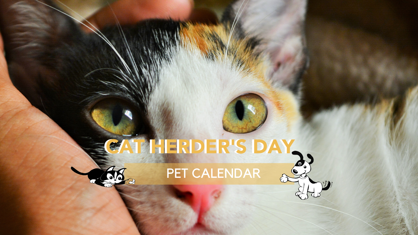 cat herder day