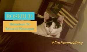 cat rescue story rosebud