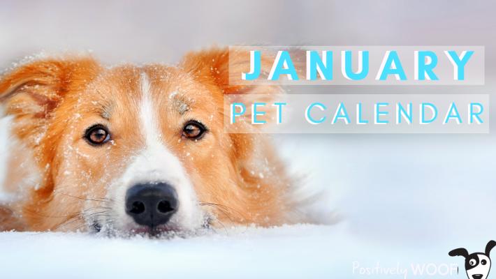 january pet calendar