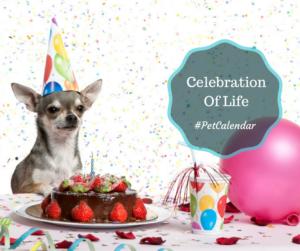 pet calendar celebrate life