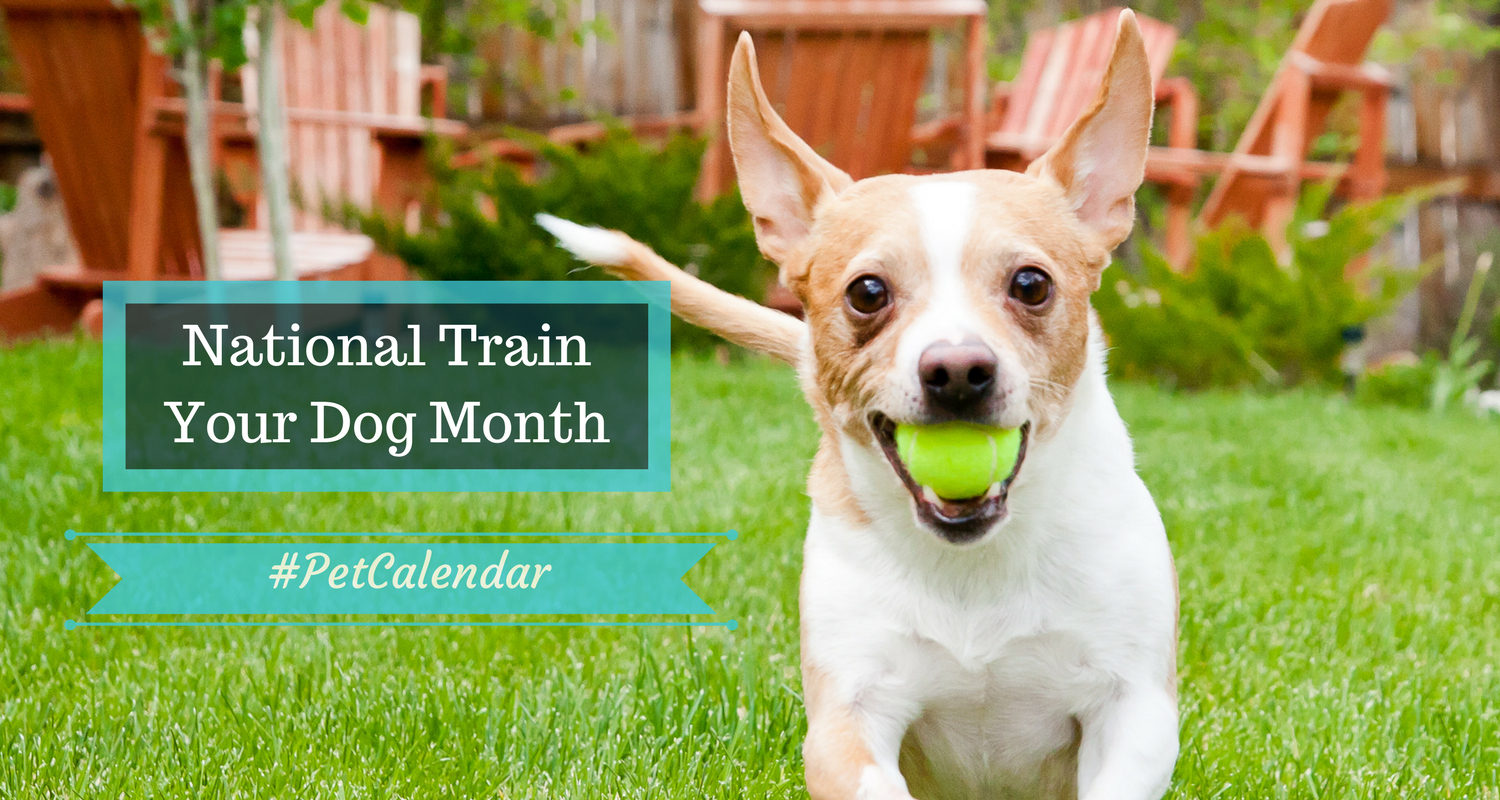 pet calendar train your dog month