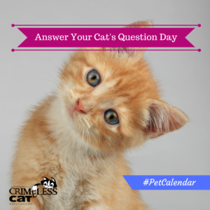 answer your cats question