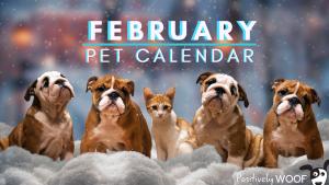 february pet cal