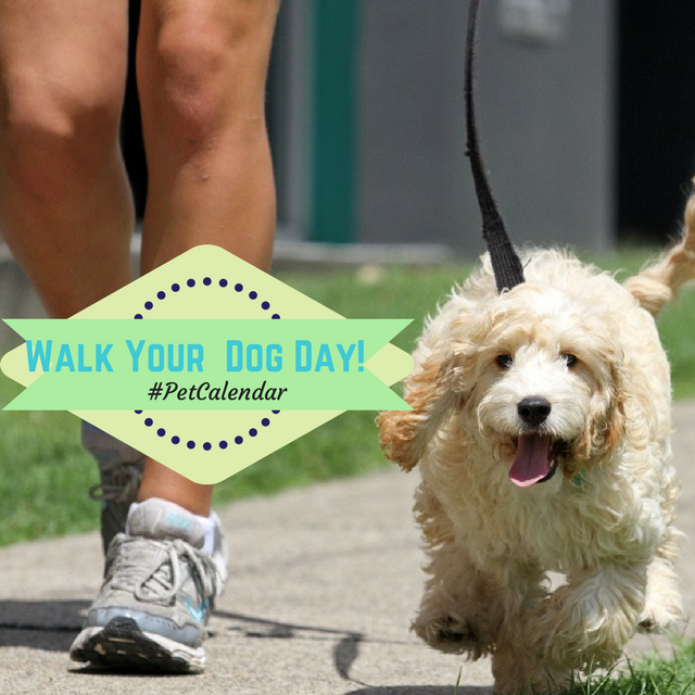 pet calendar walk your dog day