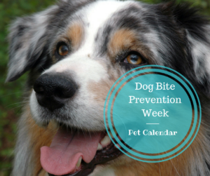 pet calendar dog bite prevention week