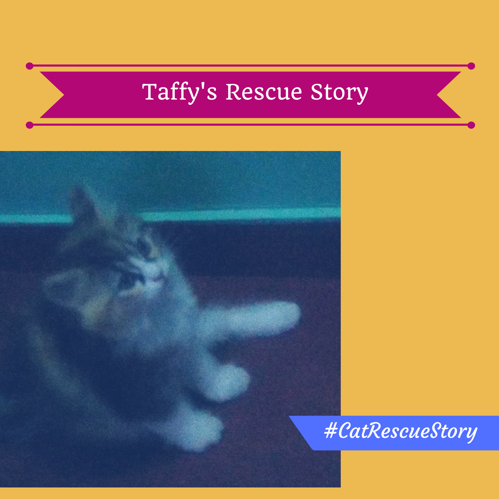 cat rescue story taffy