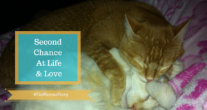 cat rescue story second chance at love