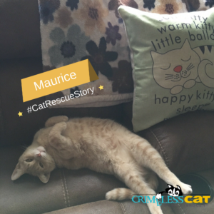 cat rescue story maurice