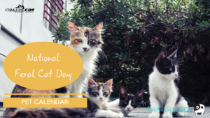 pet calendar feral cat day