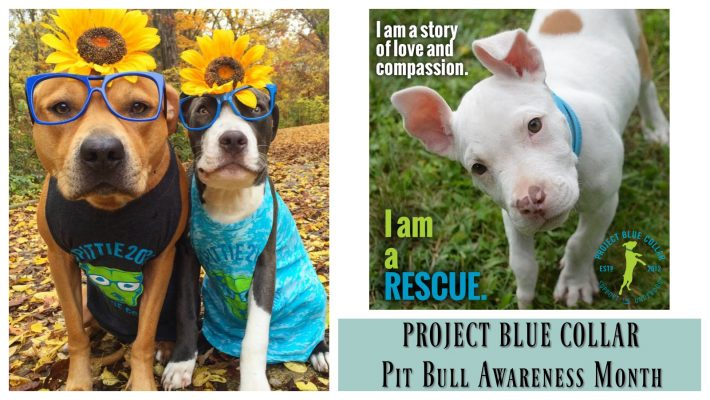 By Jarissa Aquinde, Positively Woof Rescue and Adoption Story Editor