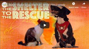 shelter dog stars