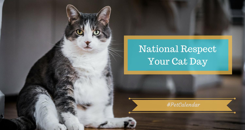 Pet Calendar: National Respect Your Cat Day