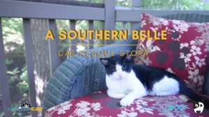 cat rescue southern belle