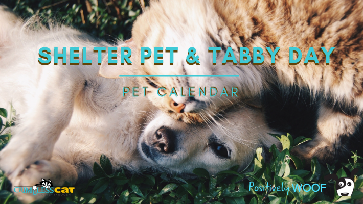 adopt a shelter pet and tabby day