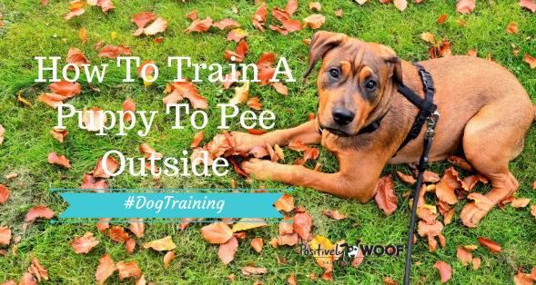 train dog to pee outside
