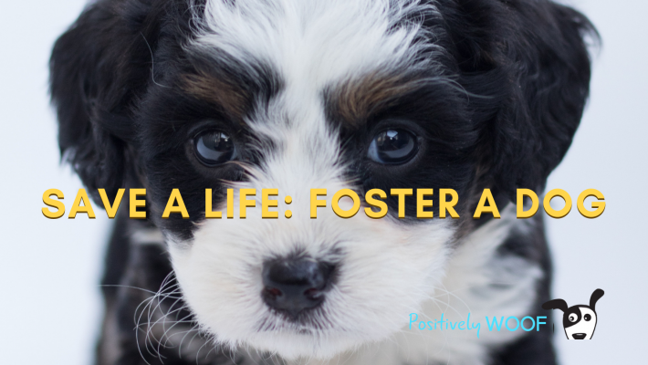 foster pet misconceptions