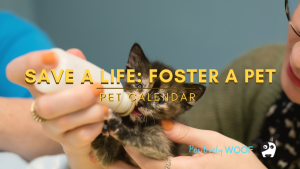 save a life foster a pet